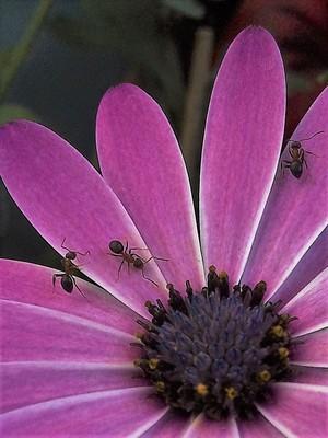 3 ANTS ..