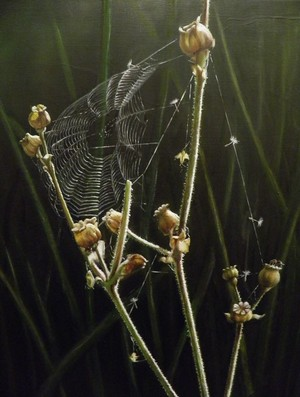Spider Web on Poppy Heads