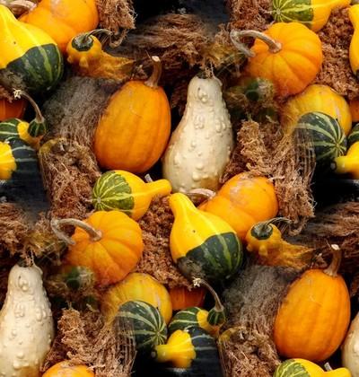 October Harvest (One)