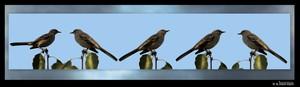 December Birds