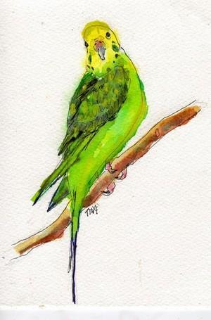 Tweedy Bird watercolor