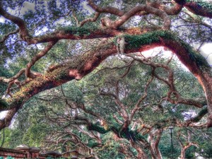 The Trees Of The St. Augustine Lighthouse 2