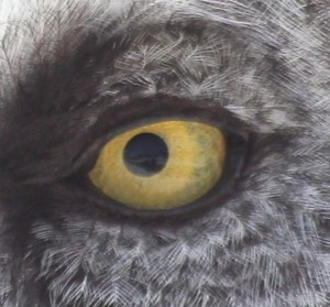 watching you....