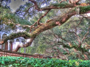 The Trees Of The St. Augustine Lighthouse