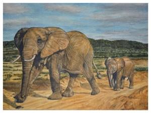 The elephant trail