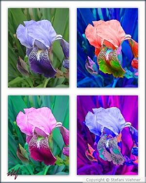 Photos: Florals
