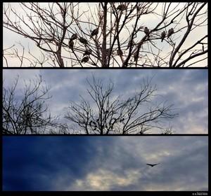 Dec 8 2016 Collage