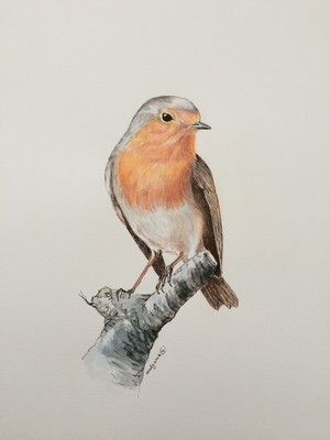 Little Robin red Breast