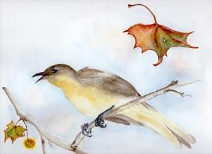 Singing bird at library