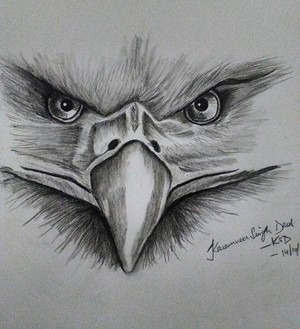 Charcoal scary eagle