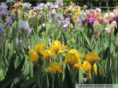 Flowers-Gardening Life