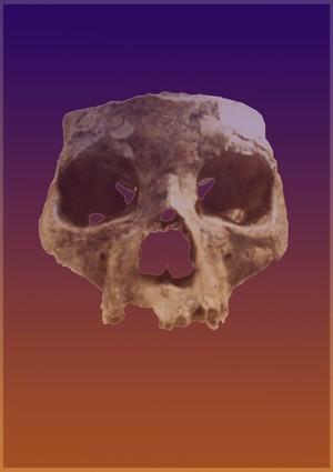 Orkney Skull
