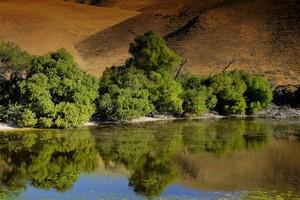 Gorman Pond 3