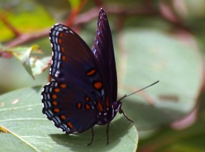 Butterflies / Bugs / Insects