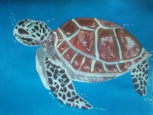 caretta caretta sea turtle