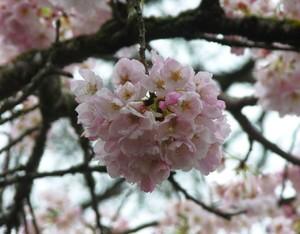 closeup-flower1