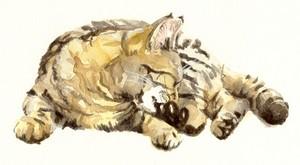 Tabby cat 1