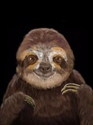 Happy Sloth Portrait