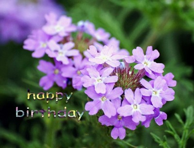 Birthday & Other Greetings