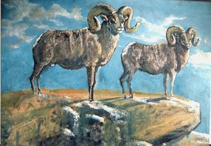 Big Horn Sheep Study 2