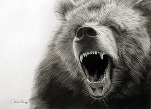Gizzly bear roar