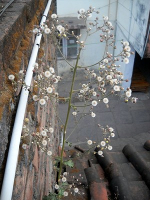 Plant of Wild Flowers on Roof