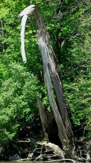 Tree or Praying Mantis?
