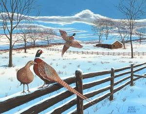 Wintering Pheasants