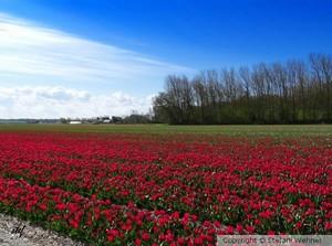 Photos: Netherland