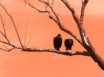 Halloween Vultures