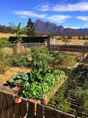 A Country Garden - Mount Barney Queensland