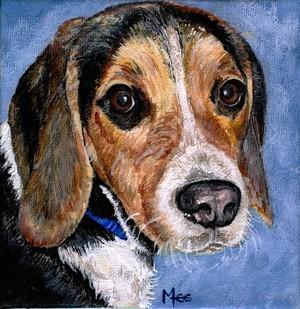 Rocky the Beagle