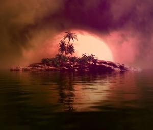 Island Frond Dreams