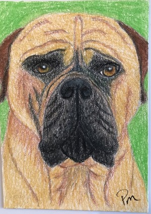 ACEO Bullmastiff Dog Original