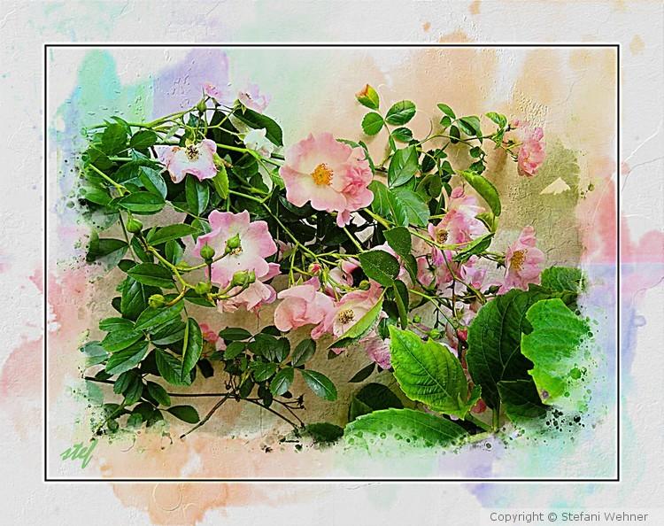 m(ai)y garden pleasure