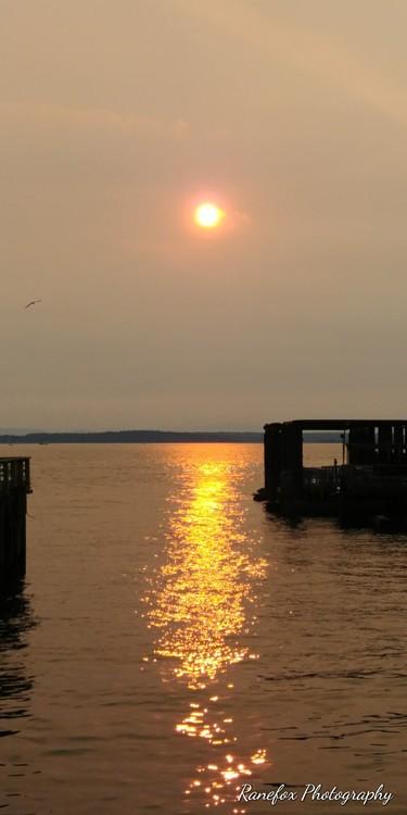 Golden Sunlight reflects on Elliott Bay