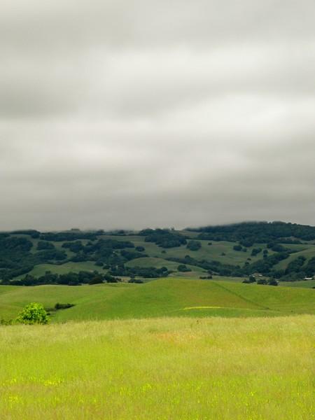 Sonoma Hills high fog
