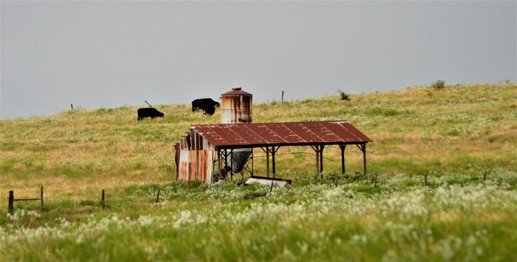 Prairie Hillside