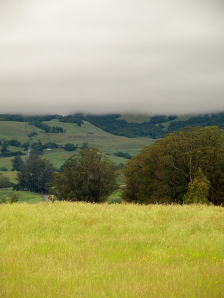 Sonoma Hills 5-2014#2
