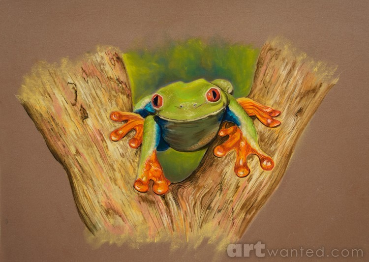 Red Footed Tree Frog