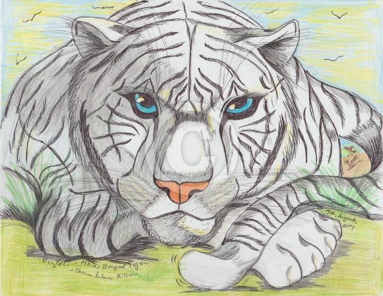 Benjali: the White bengal tiger