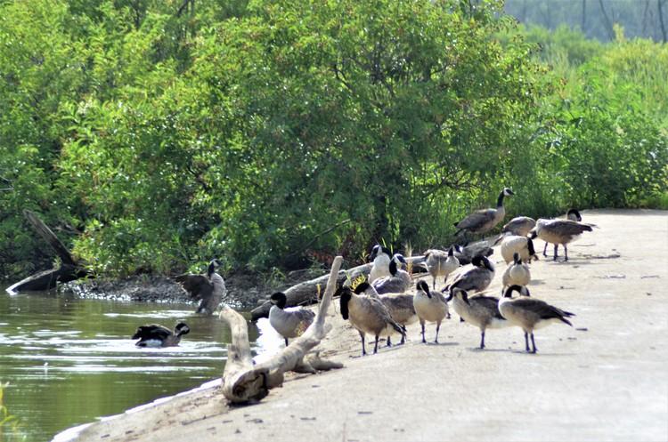 Goose Spa