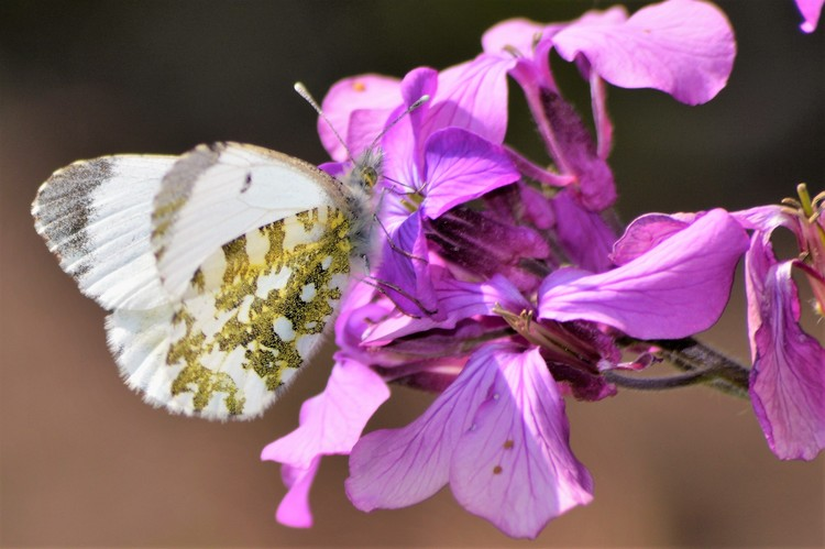 BUTTERFLY WITH GOLDEN GLITTERS .  2
