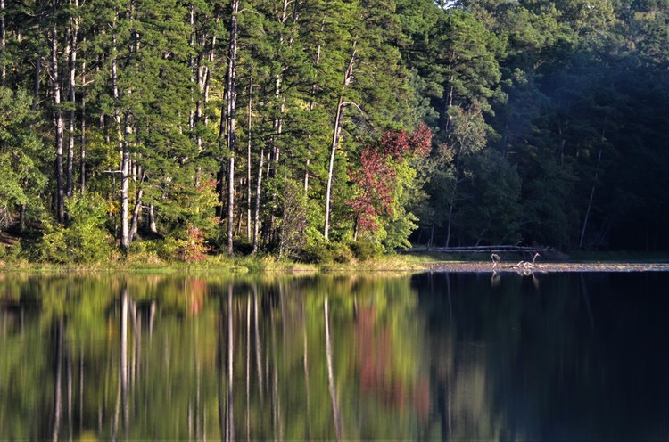 Little Pine Lake - 10.21.18