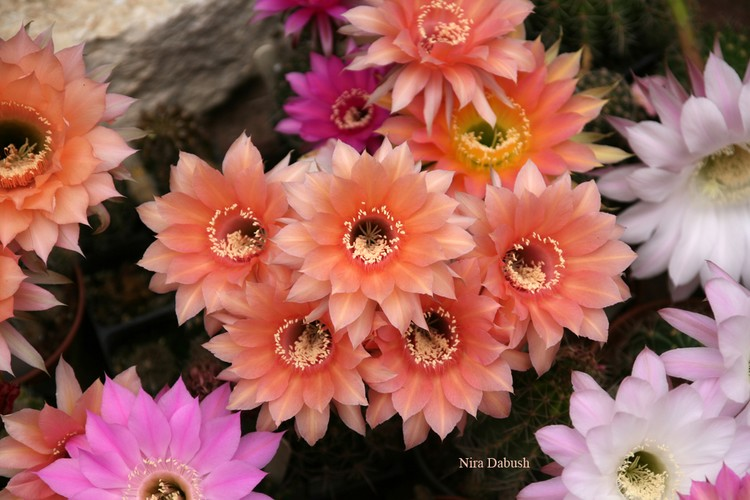 A Collection of Floral Cactus Plants