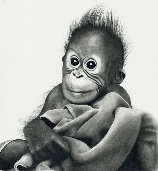 Baby gorilla drawing