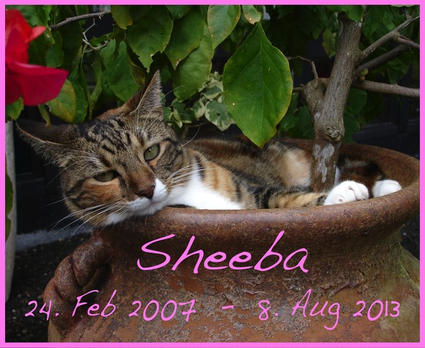 In Loving Memory of Sheeba