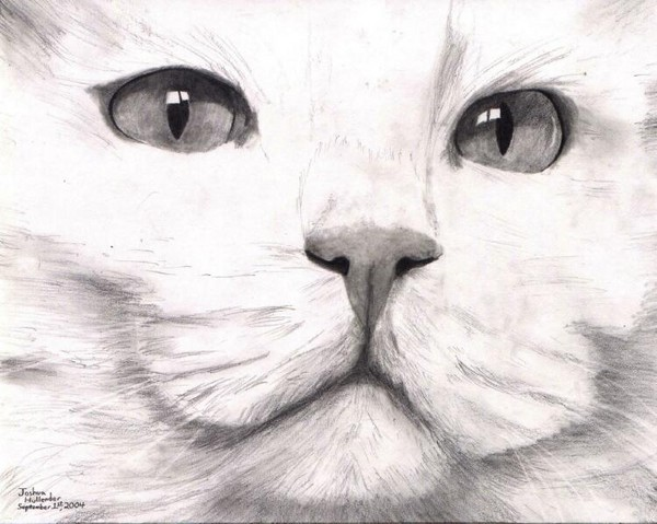 Can You Draw A Cat Turkish