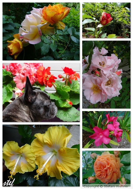 July in my garden
