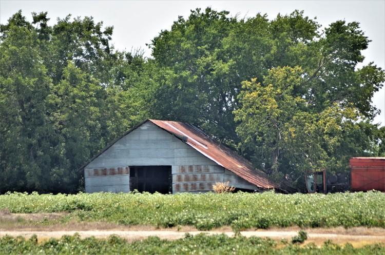 Cotton Field Barn